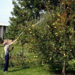 Садовая яблонная моль: фото и меры борьбы с этим опасным вредителем простыми и доступными средствами