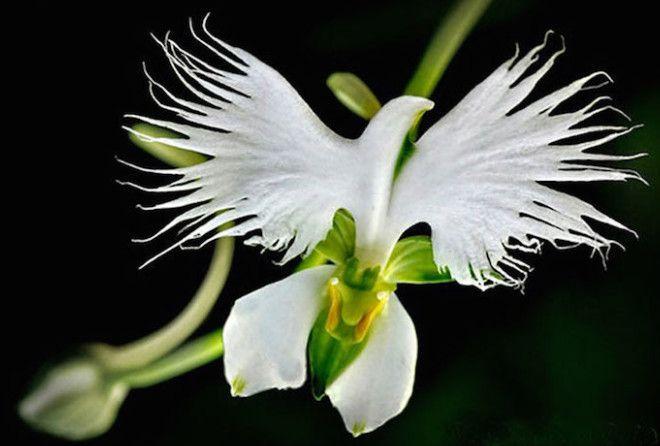 Белая бабочка