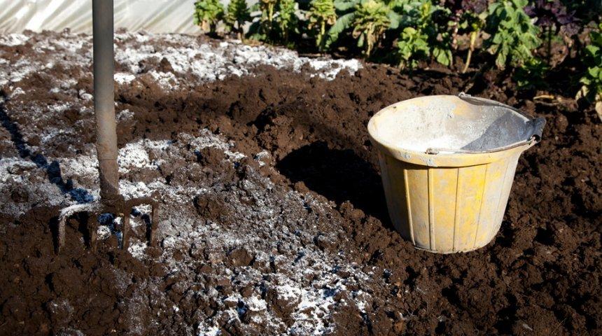 Доломитовая мука в почве