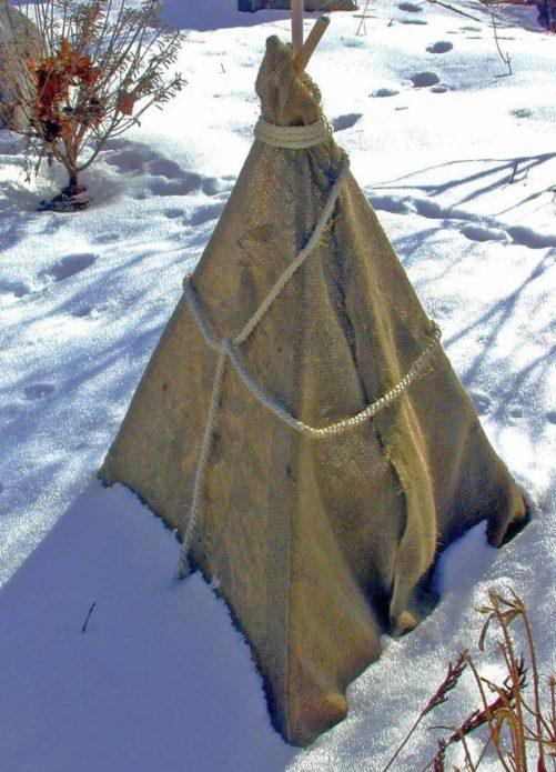 как укрыть дерево от холода