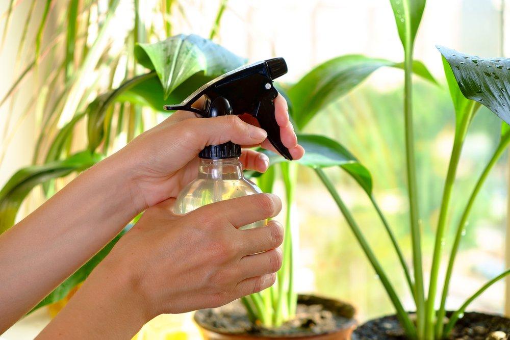 комнатные растения в картинках температура полив опрыскивание счастья пожелаем жизни