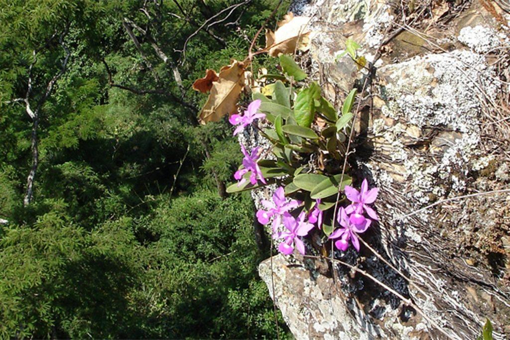 Орхидеи литофиты