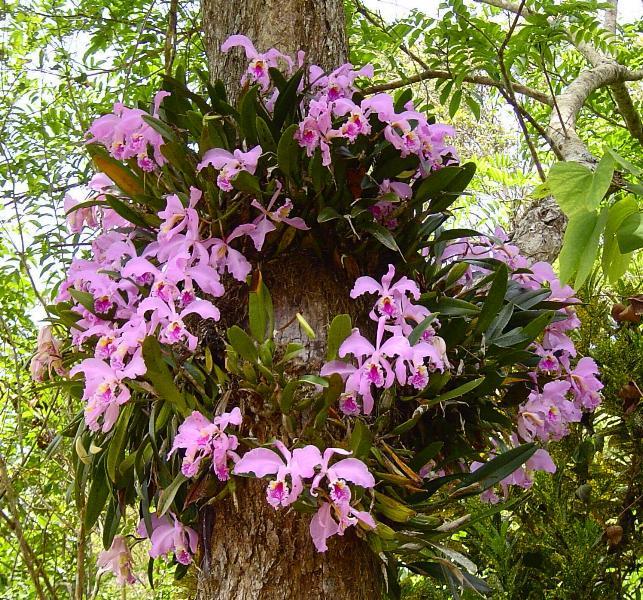 Орхидея в тропиках