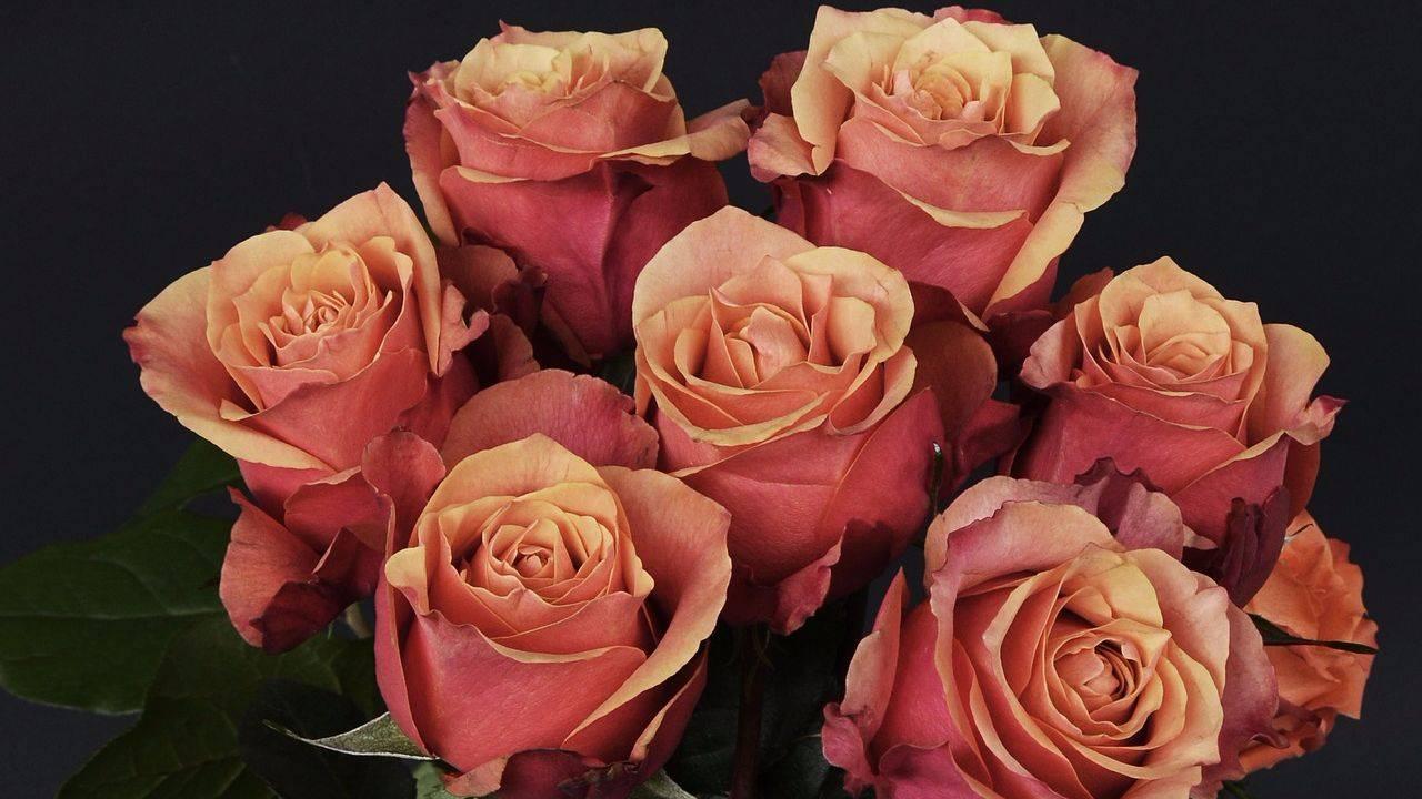 Доставка цветов укоренить розу из букета цветов заказ