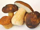 грибы собранные