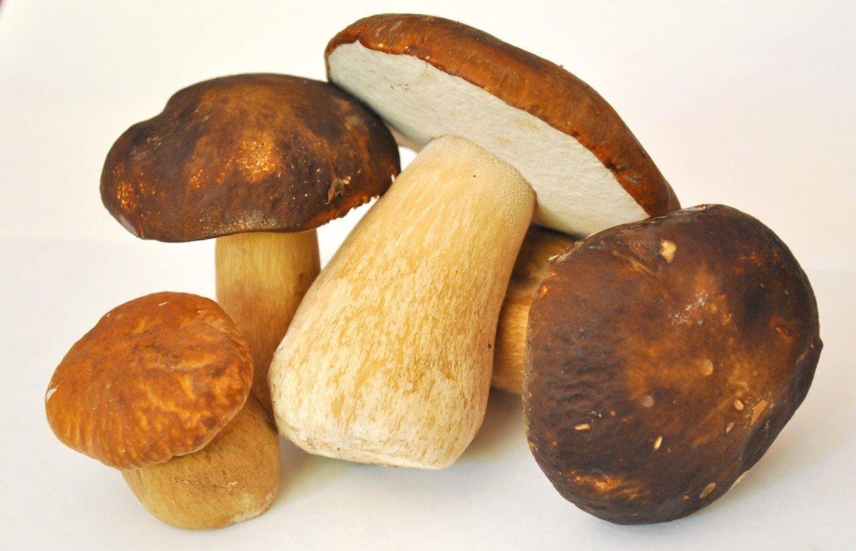Как правильно и вкусно приготовить грибы в домашних условиях