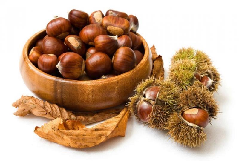 Как вырастить каштан из ореха в домашних условиях