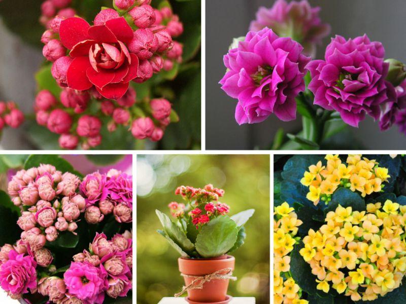 Самые красивые комнатные растения