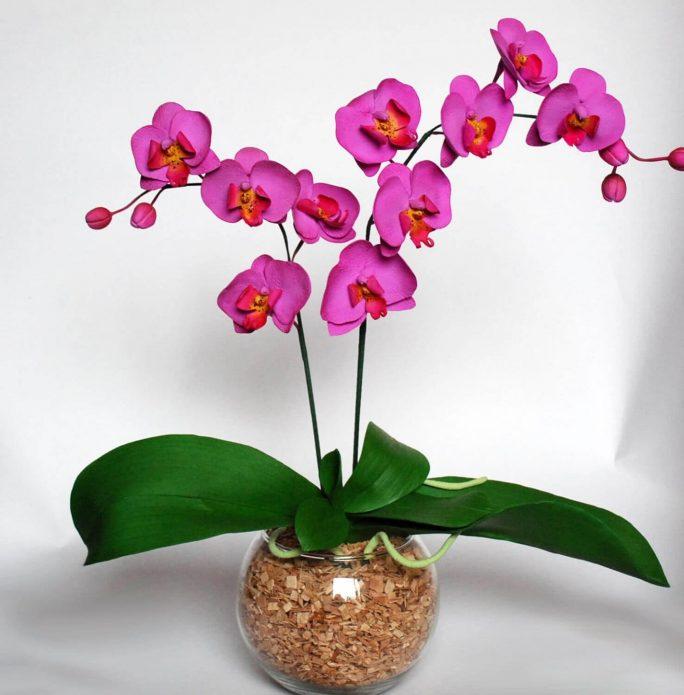 Фаленопсис — одно из самых красивых комнатных растений