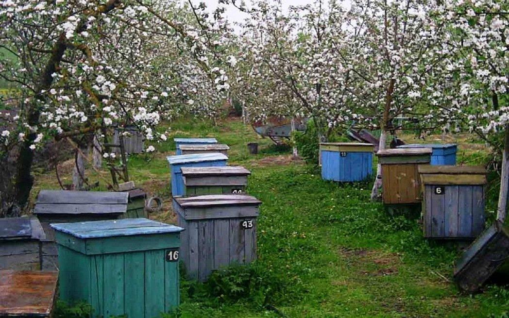 Работы на пасеке весной: советы пчеловодам
