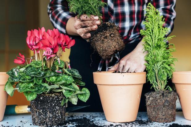 Посадка и пересадка комнатных растений в марте 2019: лунный календарьцветовода