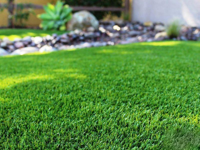 Какой газон для дачи лучше: голосуем и выбираем
