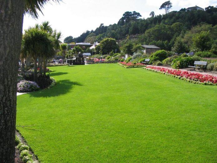 Какой газон выбрать для дачи