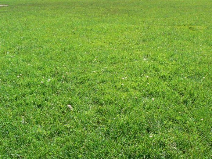 Поле с травой