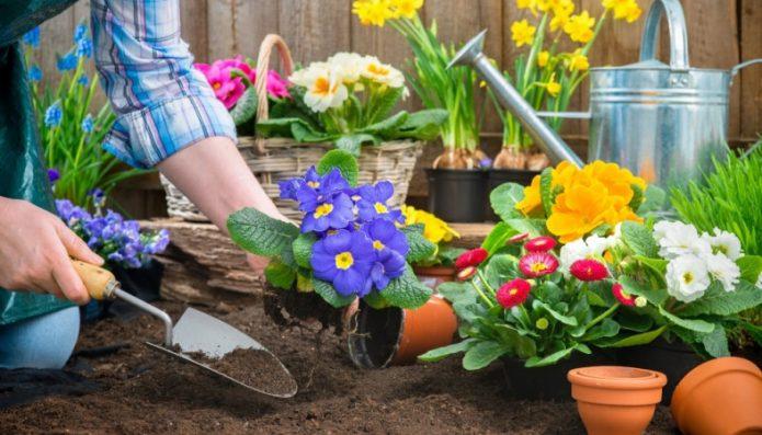 Посадка цветов в грунт