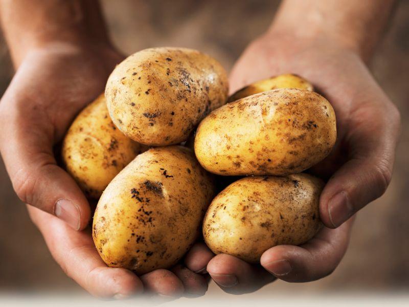 Как и когда посадить картошку в мае 2019: полезные рекомендации и способы посадки