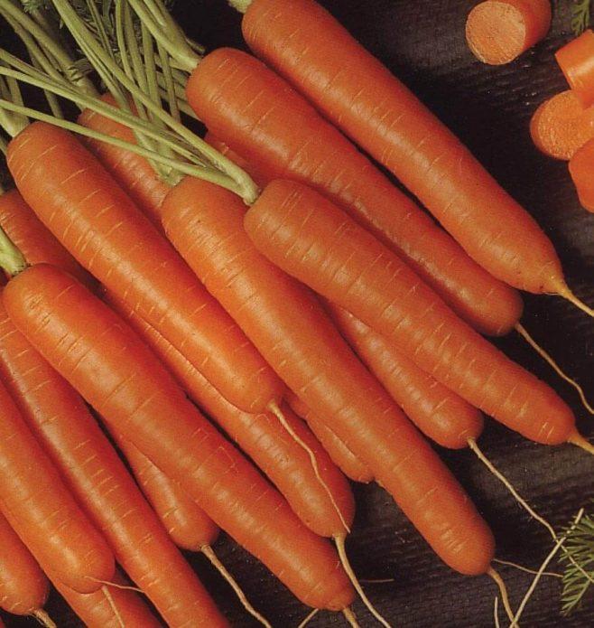 Корнеплоды «Медовой моркови»
