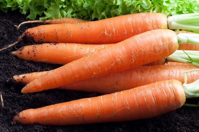 Морковь «Карамелька»