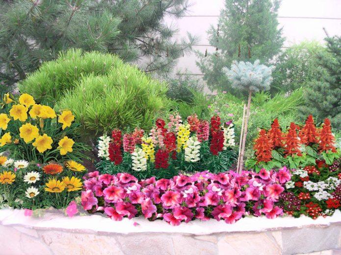 Сочетание цветочных культур в клумбе