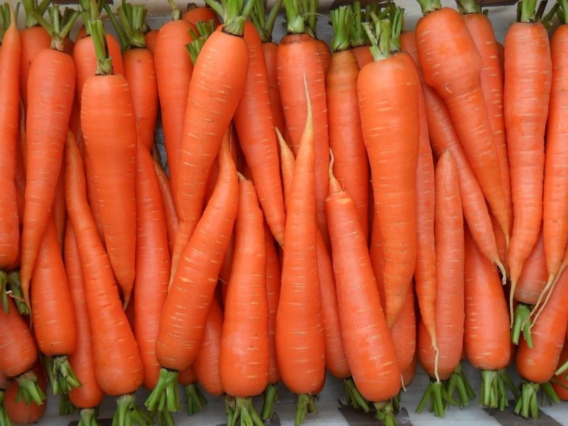 Посадка моркови в июне 2019 года: благоприятные дни для посева