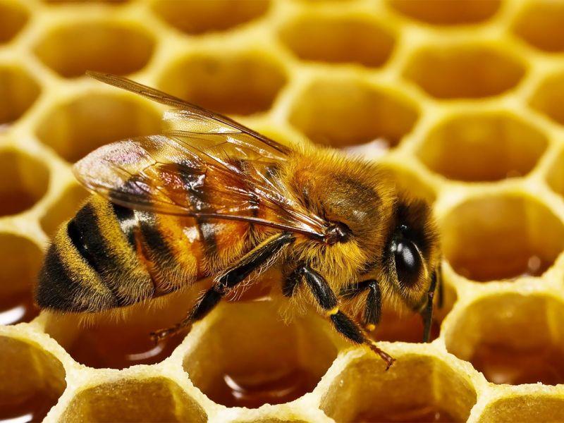 Весенняя подкормка пчёл: чем и когда кормить насекомых