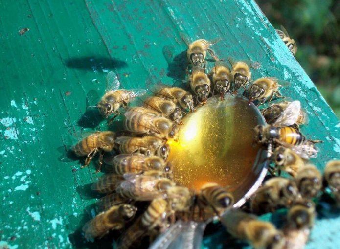 Пчёлы употребляют питательный раствор с витаминами