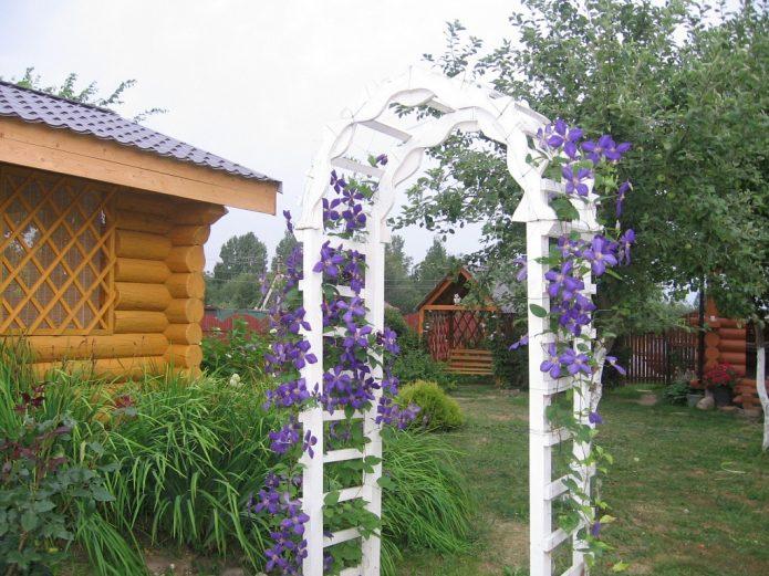 Как посадить цветы на даче красиво: видео