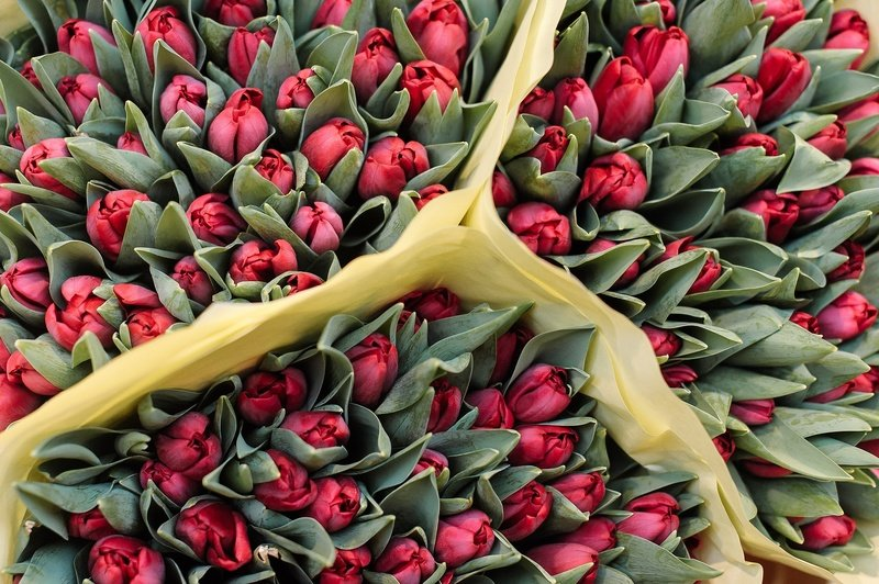 Посадка тюльпанов в августе 2019 года: правила и рекомендации