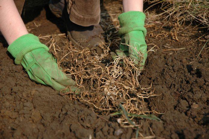 Уборка из перекопанной земли мусора