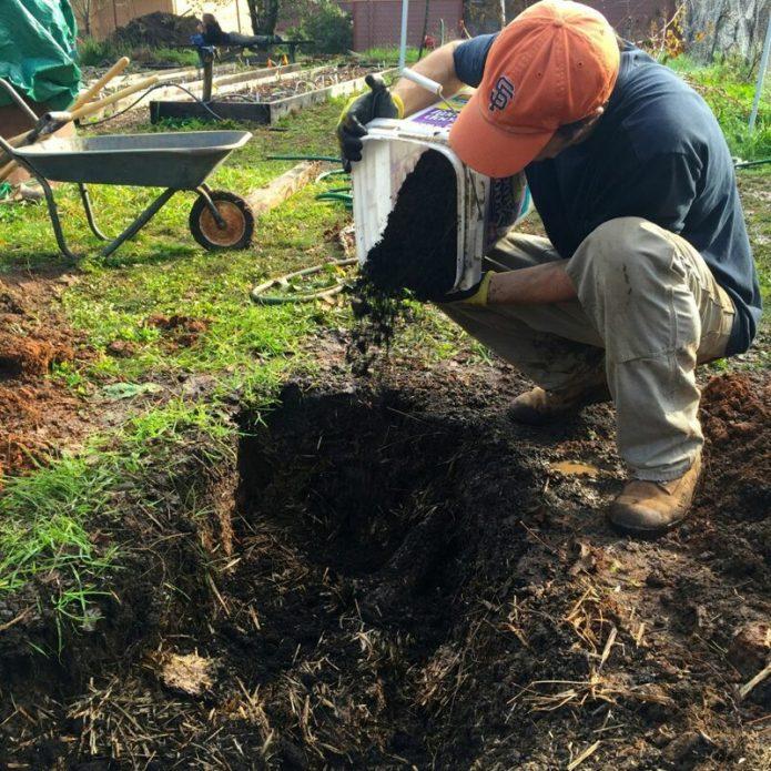 Удобрение грунта в новых лунках