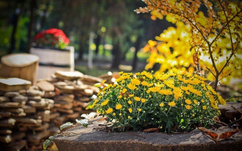 О чём не забыть в сентябре 2019 года: лунный календарь огородника и список обязательных работ в саду
