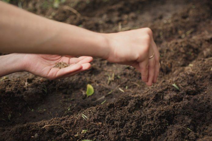 Высеивают семена