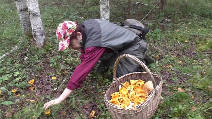 Сбор грибов осенью