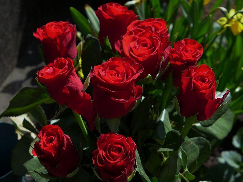 Тайное значение роз, о котором нужно знать: к чему дарят красные цветы