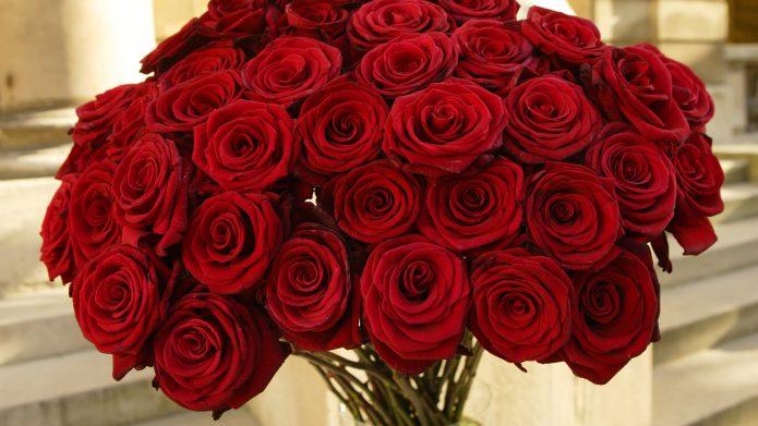Красные розы — символ страсти