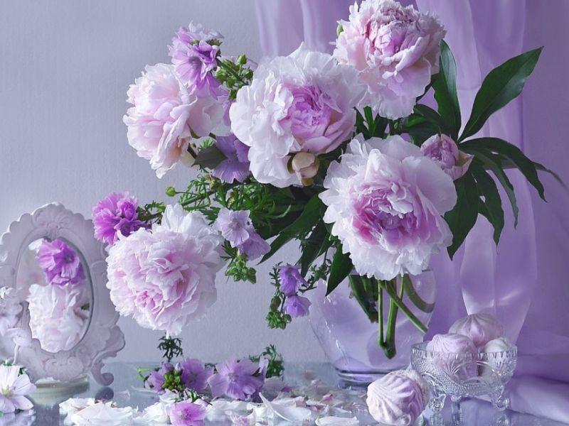 Значение пионов: используем энергетику цветов с максимальной пользой