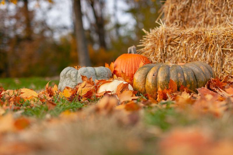 Лунный календарь садовода на октябрь 2019 года: рекомендации астрологов на каждый день