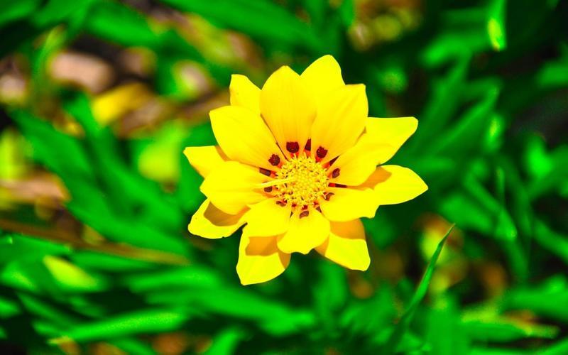 К чему дарят жёлтые цветы: стоит ли верить в приметы?