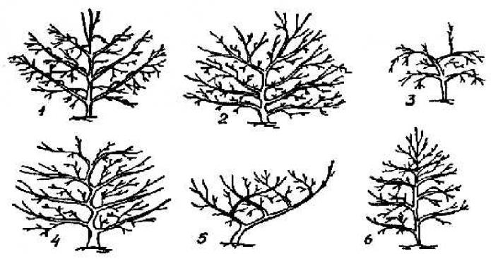 Виды крон разных деревьев