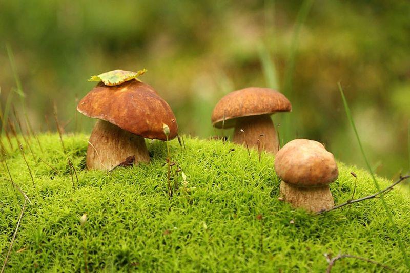 Календарь грибника на октябрь 2019 года: когда, где и какие грибы собирать?