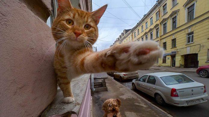 Всех кошек и собак будут регистрировать