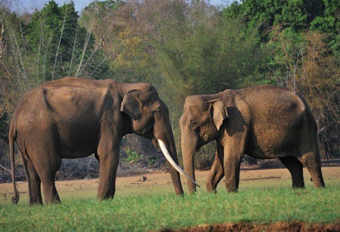 Слоны могут спать стоя