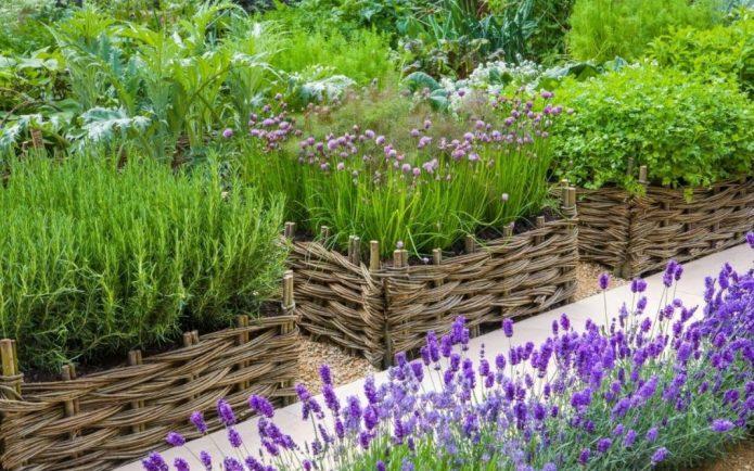 Грядки с различными травами