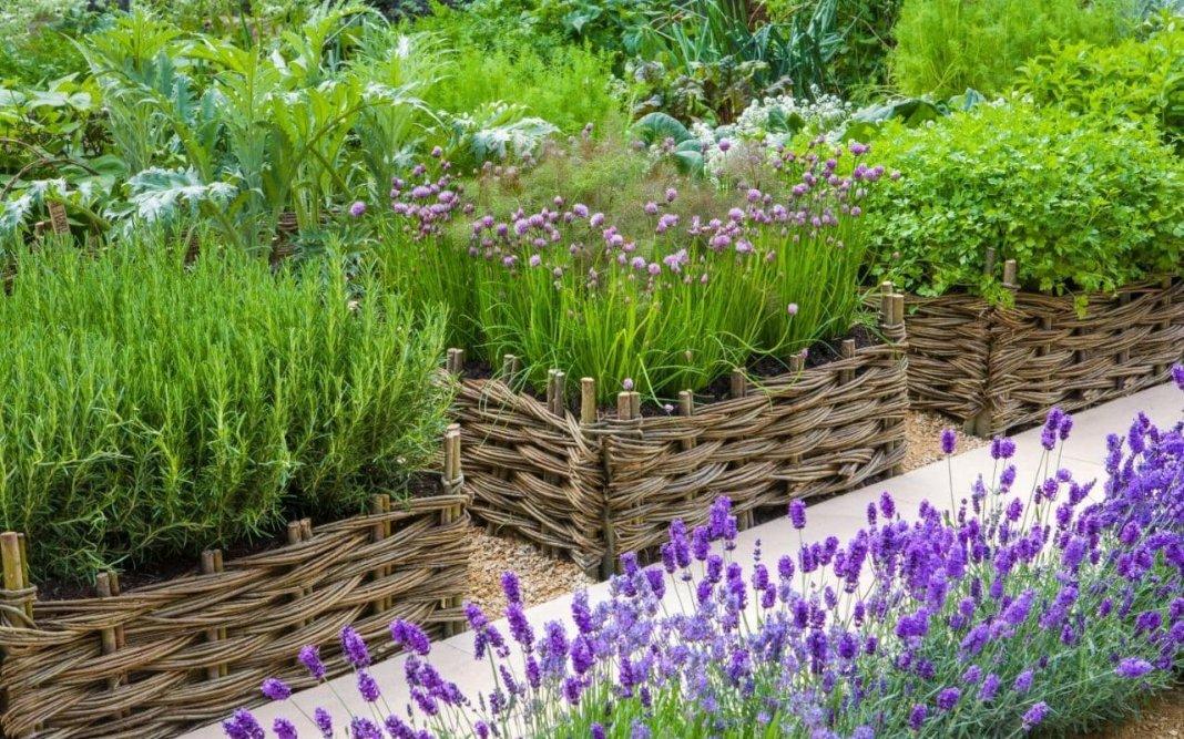 прекрасно, лекарственные растения на даче фото трепетно отношусь