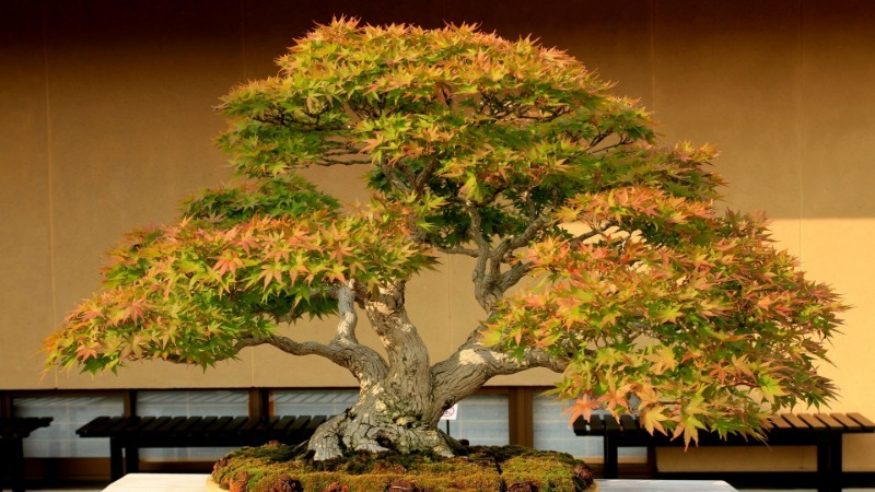 Дерево у вас дома: 4 вида, которые украсят квартиру
