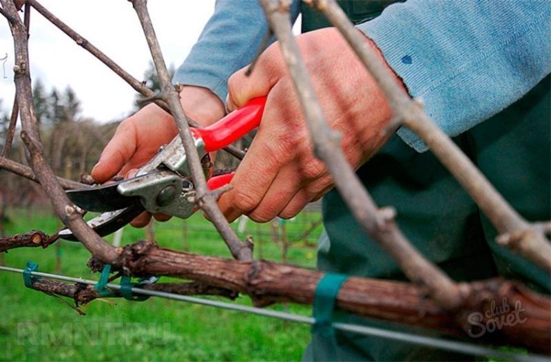 8 способов обрезки винограда осенью