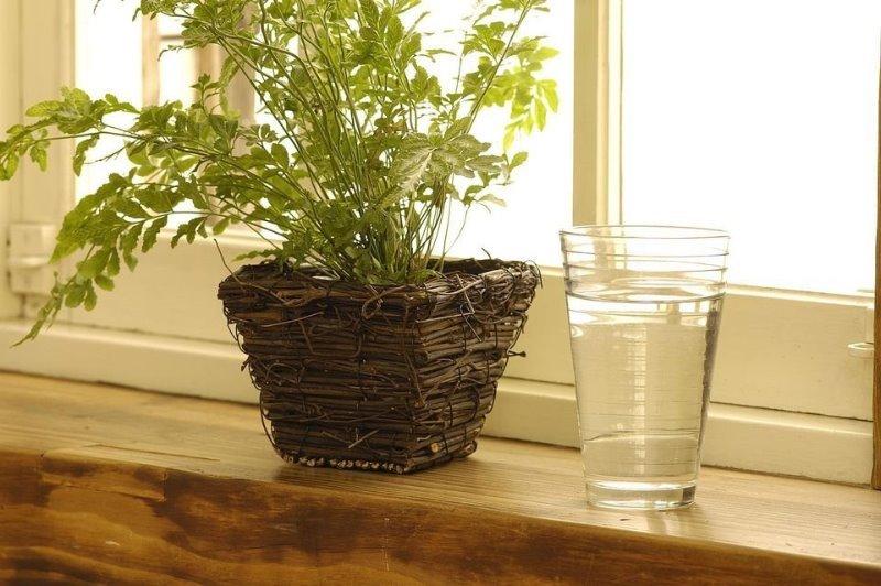 Как повысить влажность комнатных растений, если зимой они погибают из-за сухого воздуха