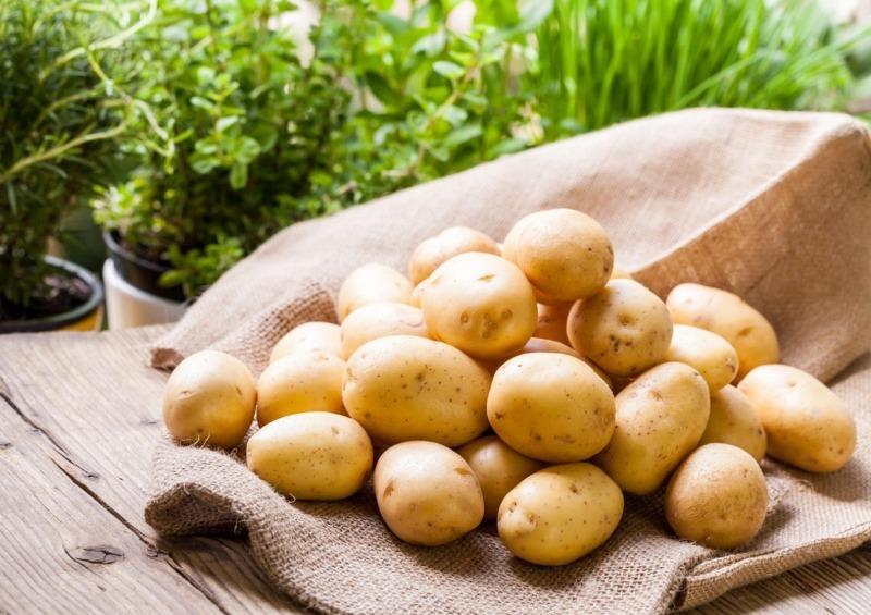 6 правил, которые помогут сберечь урожай картофеля