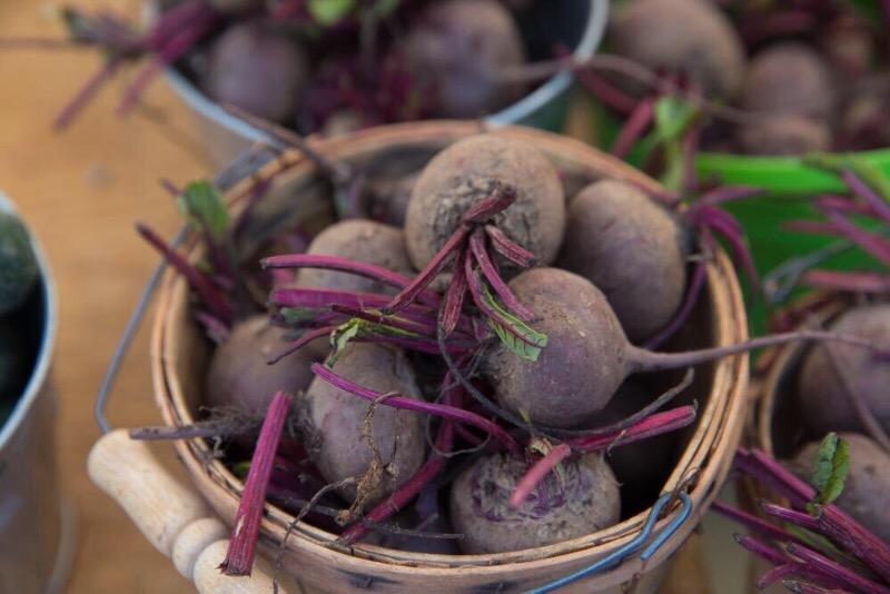 7 ошибок при хранении свеклы, из-за которых урожай быстро пропадает
