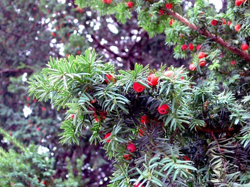 7 ядовитых для детей растений, которые опасно держать в саду